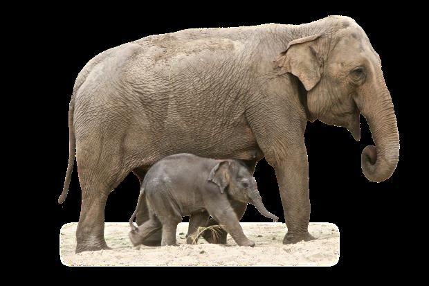 elephant-1049846_1920.png
