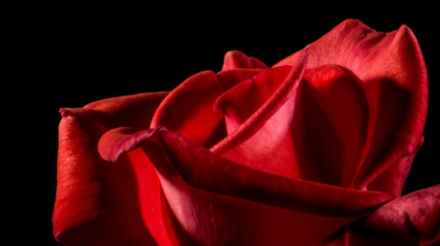 red-rose-320892_1920