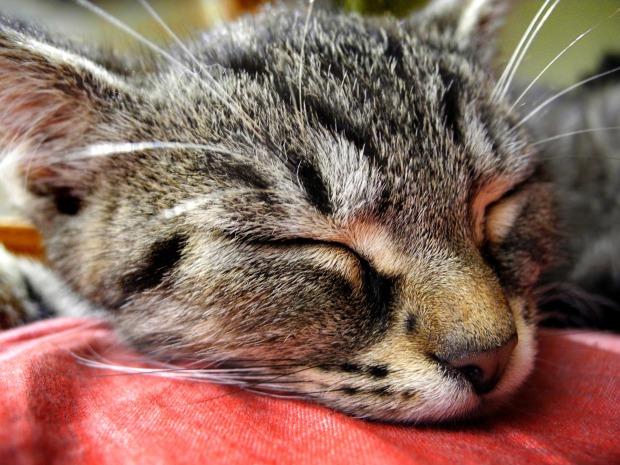 cat-1534439_1920