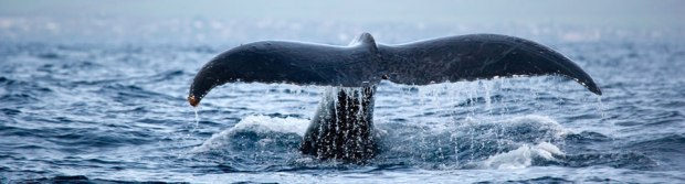 header-whales